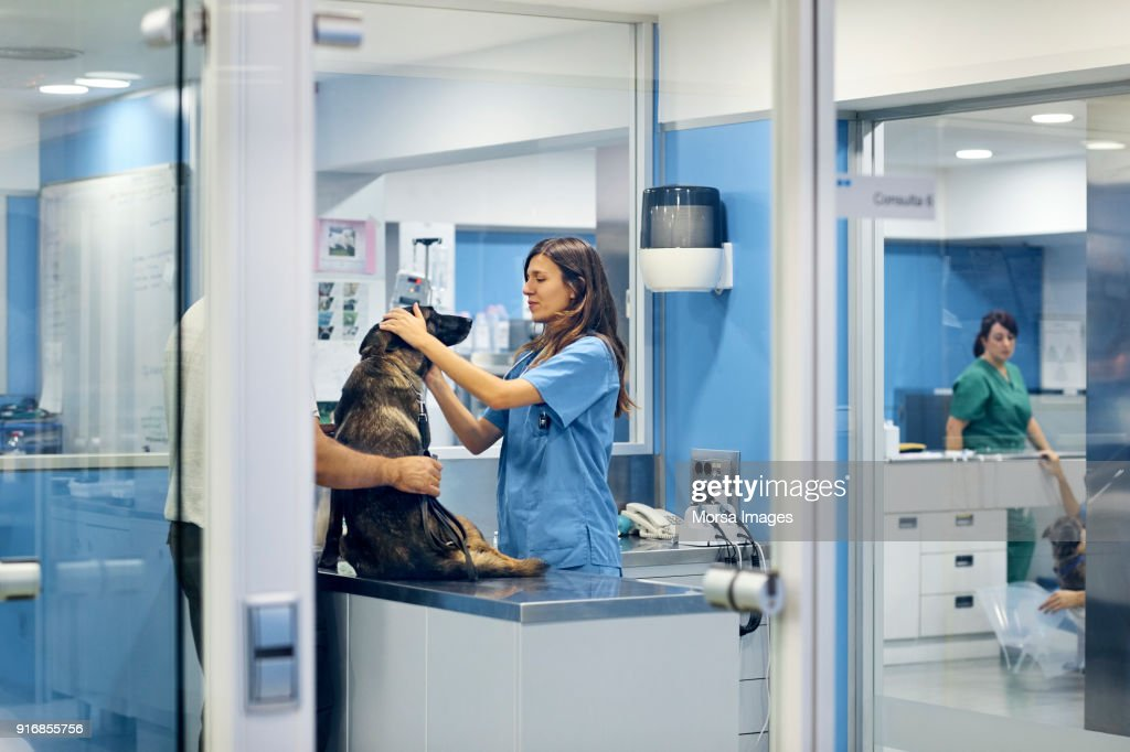 Doctors examining dog in hospital : Stock Photo
