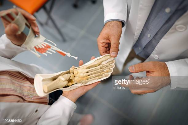 doctors looking at anatomical model of human foot in medical clinic - foot bone stock pictures, royalty-free photos & images