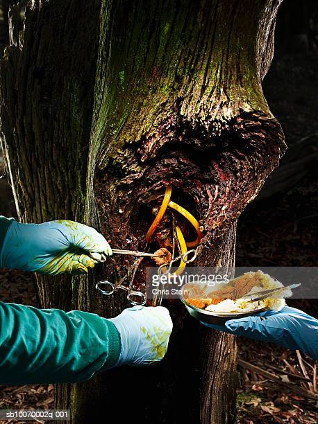 Doctors operating on tree, close-up