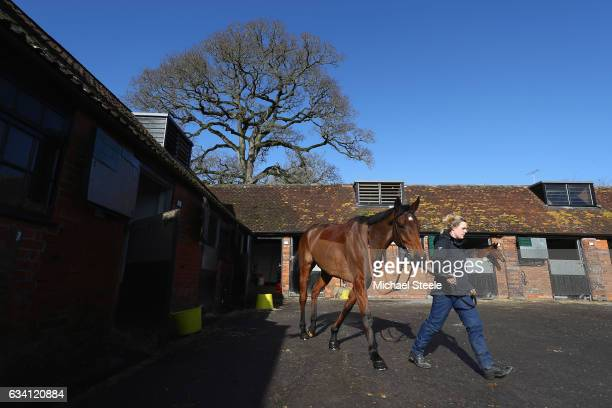 Dodging Bullets is paraded during a Paul Nicholls media day at Manor Farm Stables on February 7 2017 in Ditcheat Somerset