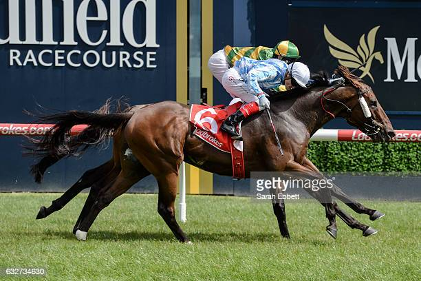 Dodging Bullets ridden by Craig Williams wins the Swettenham Stud Summer Championship Final at Caulfield Racecourse on January 26 2017 in Caulfield...