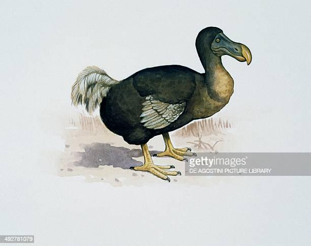 Dodo Columbidae Artwork by Kevin Lyles