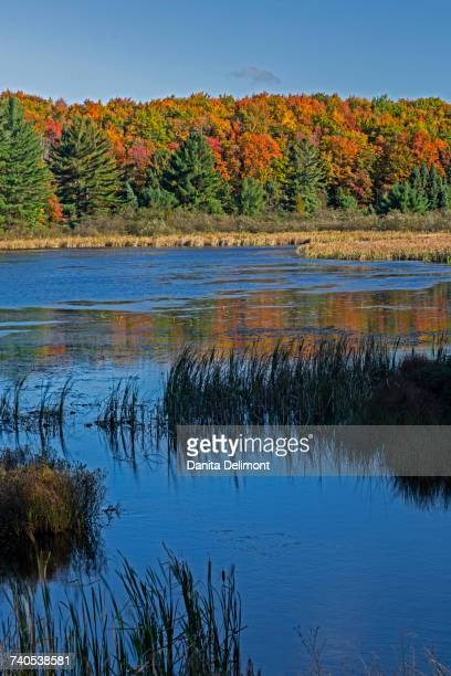 doe lake on sunny day, hiawatha national forest, upper peninsula, michigan, usa - hiawatha national forest stock pictures, royalty-free photos & images