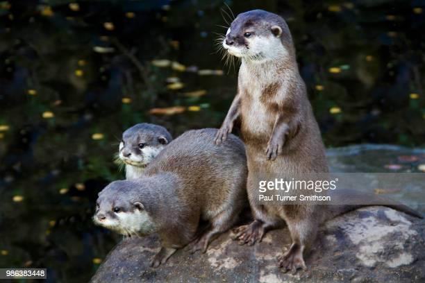 doesnt get any otter - lontra imagens e fotografias de stock