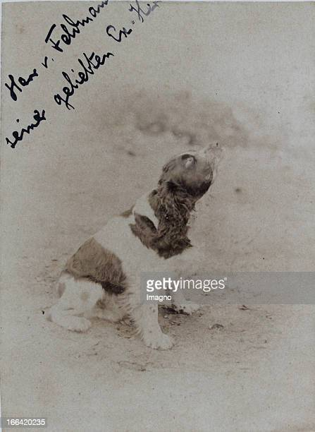 Dog . About 1900. Photograph by Hermann Lövy / Szigetvar. Photograph. Hund . Um 1900. Photographie von Hermann Lövy /Szigetvar. Photographie