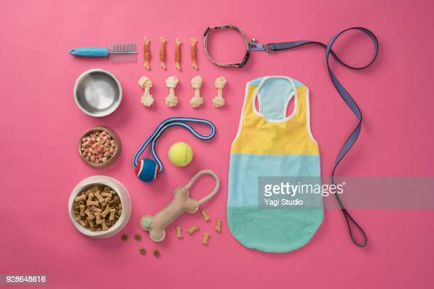 dog accessories  knolling style on pink background. - pet leash stock pictures, royalty-free photos & images