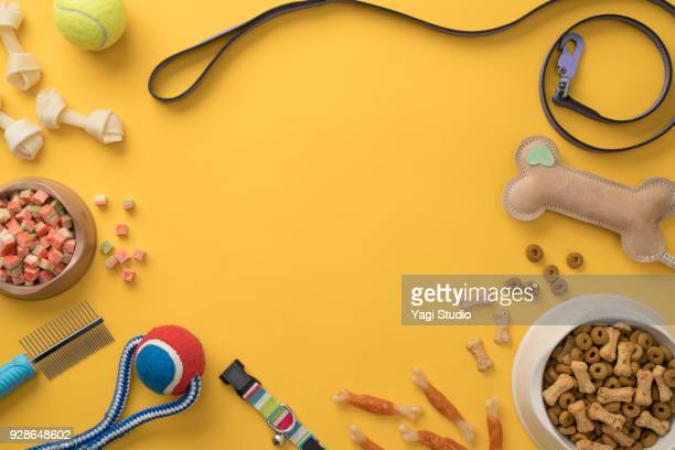 Dog accessories knolling style on yellow background.