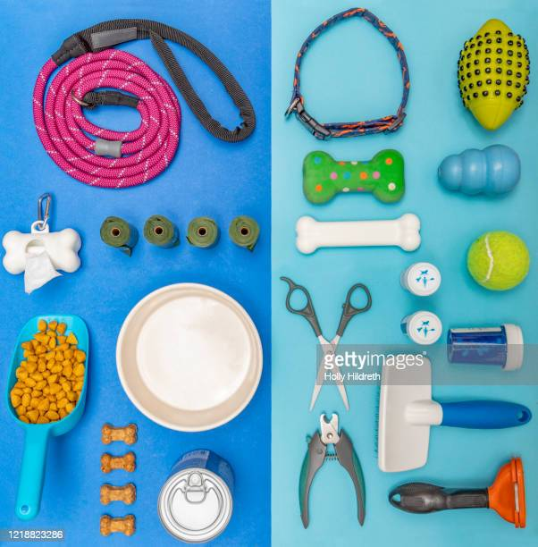 dog accessories - riem persoonlijk accessoire stockfoto's en -beelden