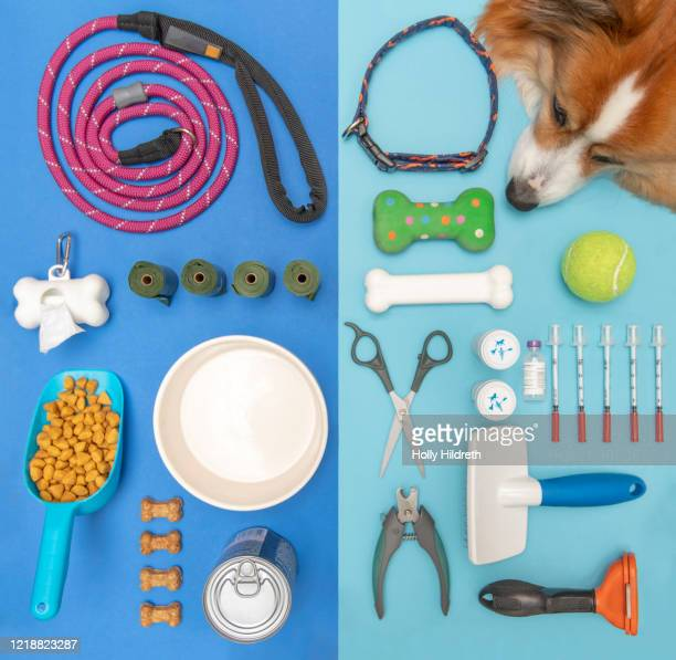 dog accessories - pet equipment stock pictures, royalty-free photos & images