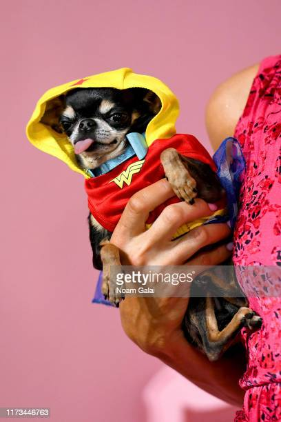 Dog accompanies Paris Hilton at the Alice Olivia By Stacey Bendet Presentation during September 2019 New York Fashion Week The Shows on September 09...