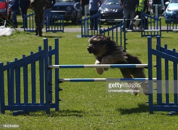 Dog agility competition at the Royal Cornwall ShowgroundThe Cornwall Agility Club show UK