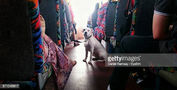 Dog Amidst People On Seat In Bus