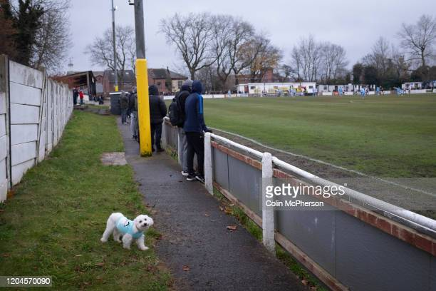 A dog amongst the crowd during the firsthalf as Atherton Collieries played Boston United in the FA Trophy third qualifying round at the Skuna Stadium...