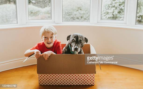 dog and a boy in a box - adoption stock pictures, royalty-free photos & images