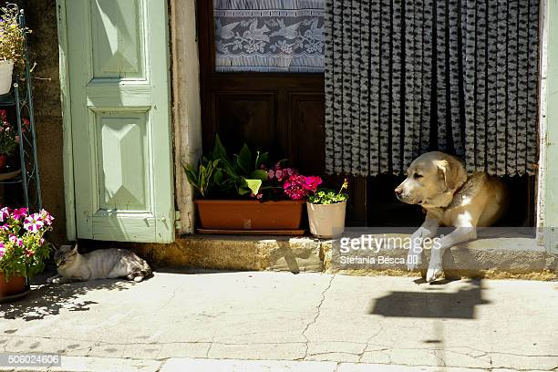 A dog and a cat resting in front of home