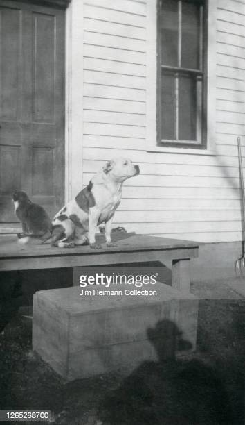 Dog and a cat sit with their backs to each other on the back porch of a house, circa 1928.