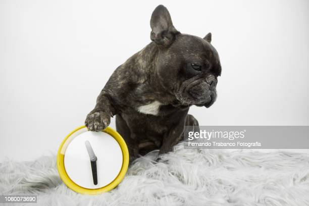 Dog and alarm clock