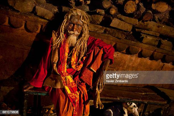 A dog and an old sadhu wearing red clothes with wood for the fire near the cremation grounds of Manikarnika Ghat on the banks of Ganges the most...