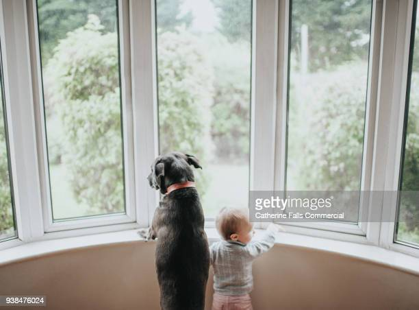 dog and baby staring out a large window - domestic animals stock pictures, royalty-free photos & images
