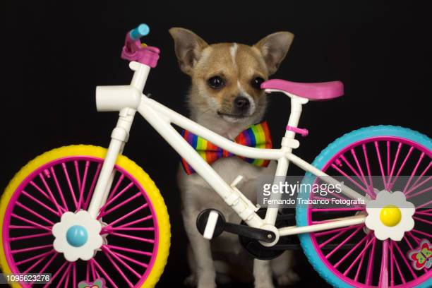 Dog and bicycle