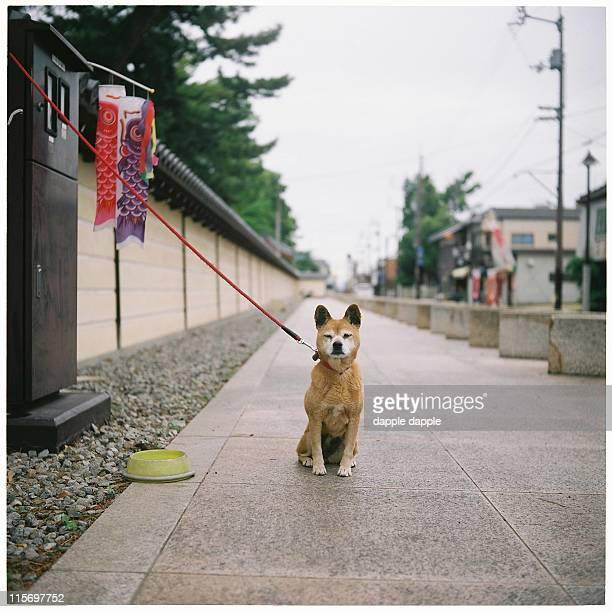 Dog and carp flag