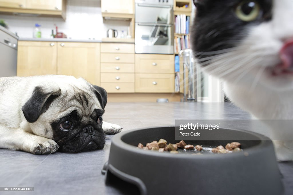 Dog and cat in kitchen with food : Stock Photo