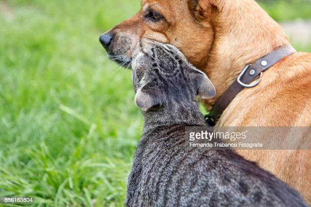 Dog and cat in love