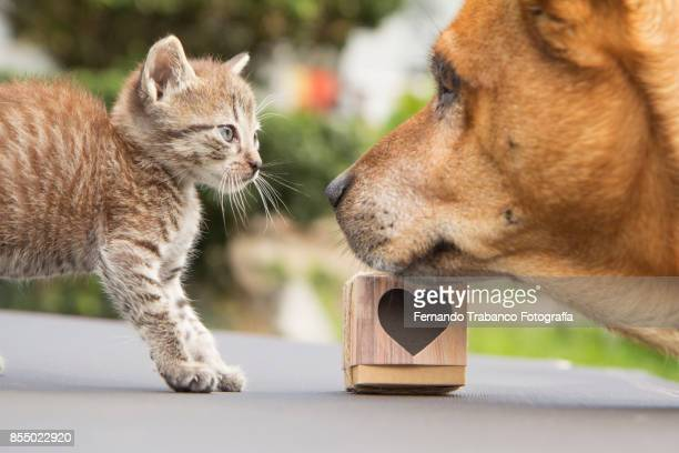 dog and cat look at each other with love