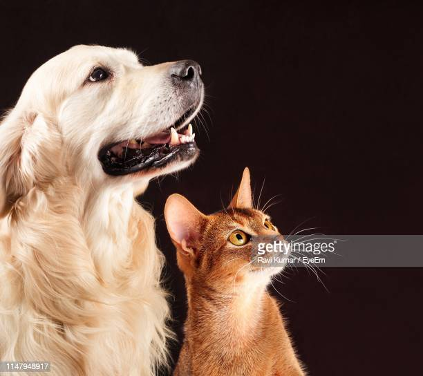 dog and cat on black background - cat and dog stock pictures, royalty-free photos & images