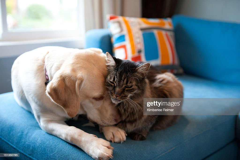 Dog and cat : Stock Photo