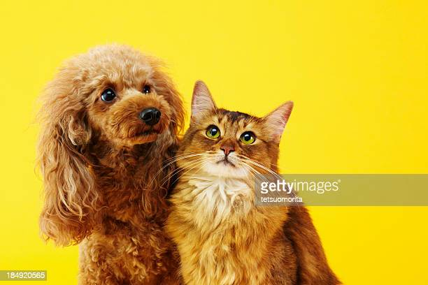 dog and cat - schattig stockfoto's en -beelden
