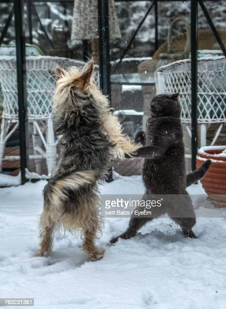 Dog And Cat Playing On Snow During Winter