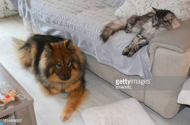 dog and cat resting france - two seater sofa stock pictures, royalty-free photos & images