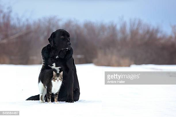 A dog and cat who are friends