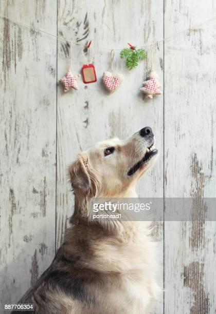 犬とクリスマスの装飾