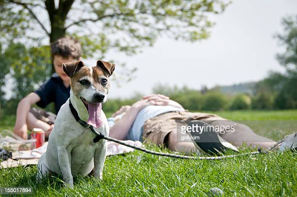 dog and family at park - oxfordshire stock pictures, royalty-free photos & images