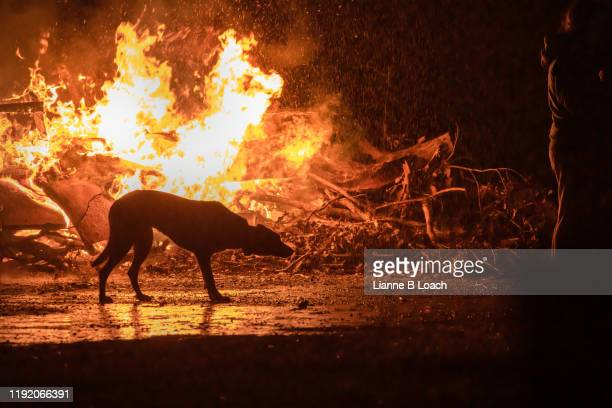 dog and fire - lianne loach stock pictures, royalty-free photos & images