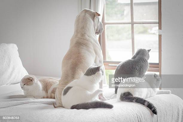 Dog and four cats looking out of window