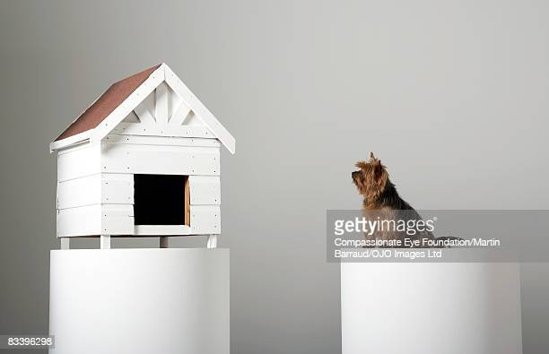 Dog and his house separated on two pedestals