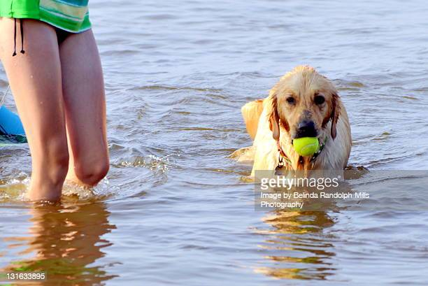 Dog and human on beach.