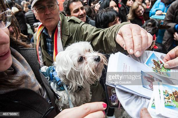 A dog and its owner wait outside the church as faithful take pictures of Saint Anthony after a traditional mass for the blessing of animals at the...