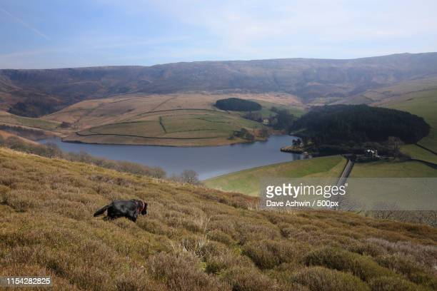 dog and landscape - dave ashwin stock pictures, royalty-free photos & images