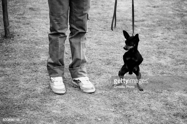 Dog and man legs at dog show, Mumbai, Maharashtra, India, Asia, 1985