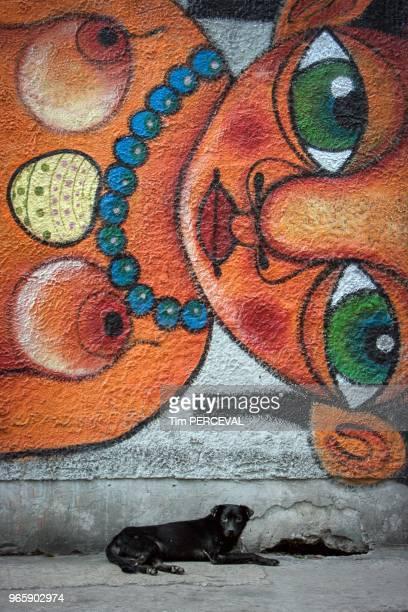 Dog and mural Havana