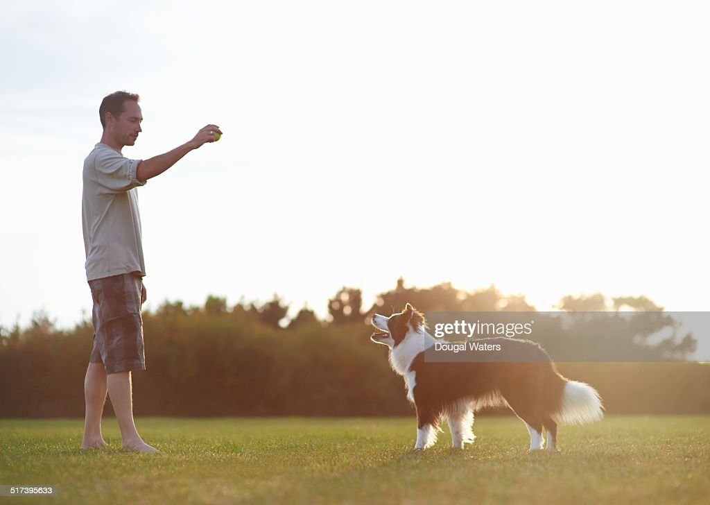 Dog and owner playing with ball in field. : Stock Photo