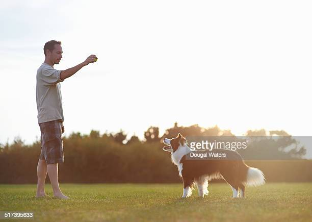 dog and owner playing with ball in field. - border collie fotografías e imágenes de stock