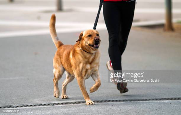 Dog and owner running