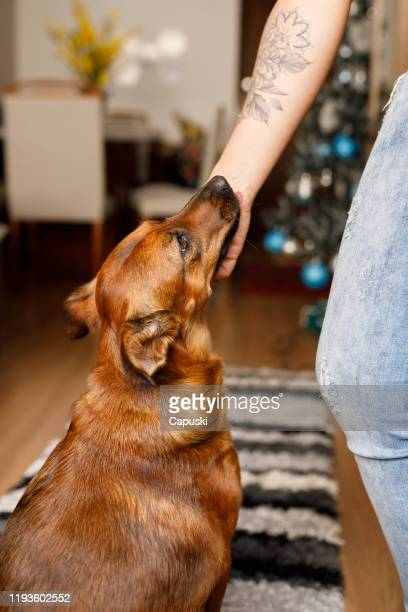 dog and owner showing affection - mixed breed dog stock pictures, royalty-free photos & images