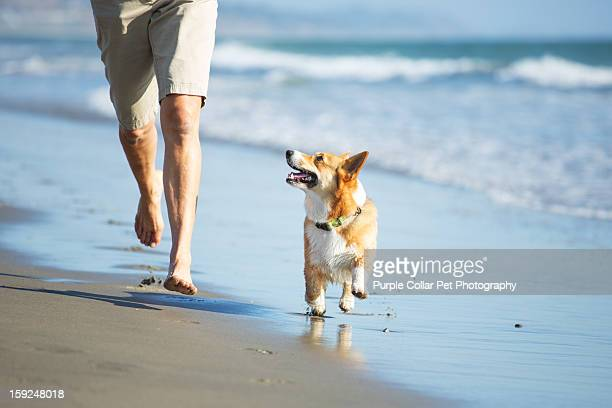 Dog and Person Running on Beach