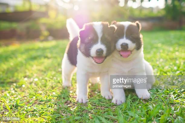 Hund und-Klößchen